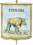 Ox, Ephraim
