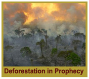 Deforestation in Prophecy