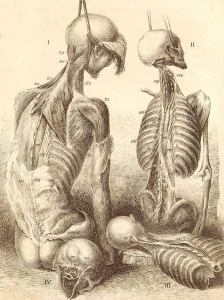 """""""Them Bones"""" Kill or Heal"""