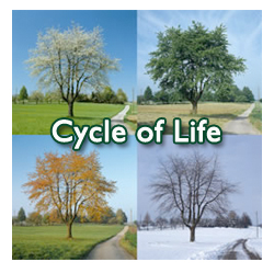 cycle-of-life-seasons